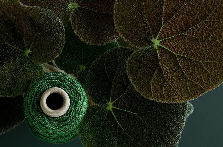 pom_the-green-thread_05